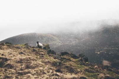 Photograph by Luke Ellis-Craven