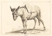 Mulet (Mule or Saddled Donkey) by Jacques-Philippe Le Bas and Jean Eric Rehn.