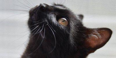 cat-1507603_1280